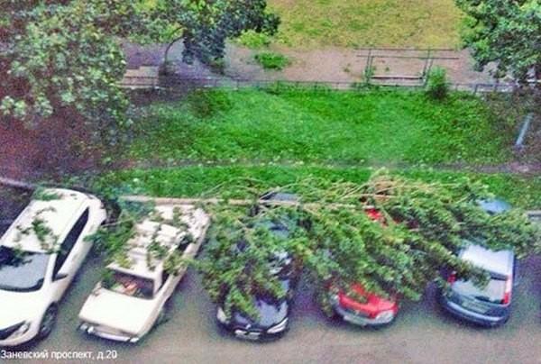 ВПетербурге ураганный ветер повалил неменее 70 деревьев
